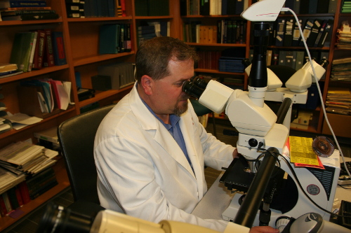 Adjunct Associate Professor Dirk Keene looks into a microscope